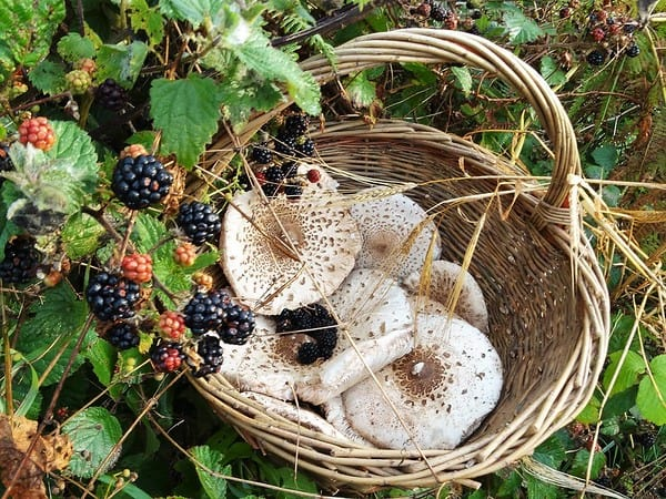 basket with mushrooms and berrys